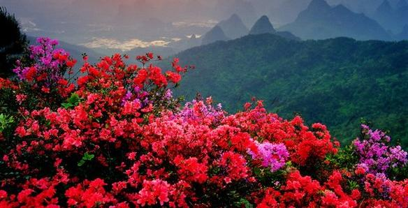 flores-china.jpg