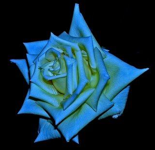 rosa_azul.jpg
