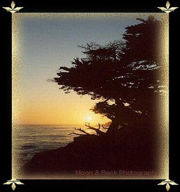 sunsetcypresstop.jpg